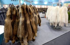 BEIJING CHINA JANUARY 14 CHINA OUT Raw furs are on display during the 40th China Fur And Leath