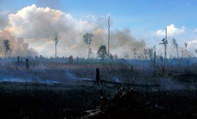 abgebrannter-regenwald