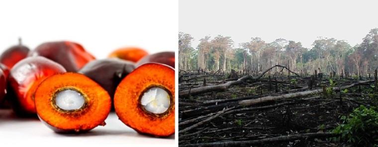 Zerstörter Regenwald, alles für Palmöl.