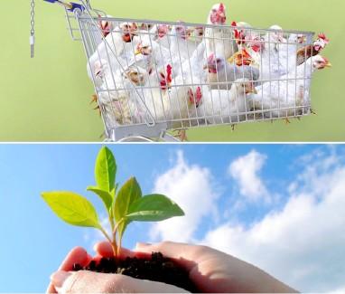 welche auswirkungen hat unsere ern hrung auf die umwelt wir essen pflanzen. Black Bedroom Furniture Sets. Home Design Ideas