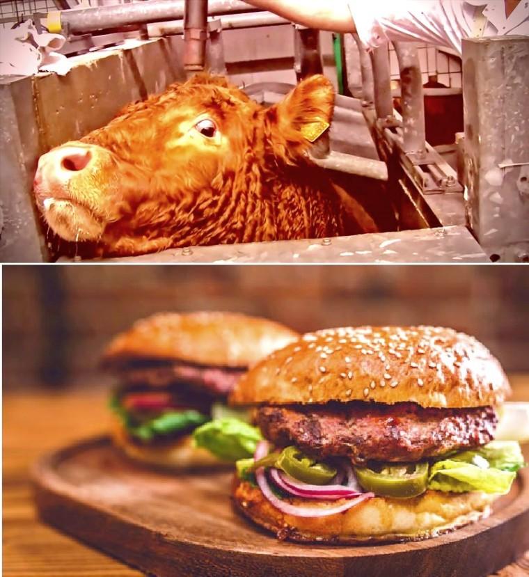 Blog Eintrag 2015_06 Adbusting 'Gutes Fleisch'