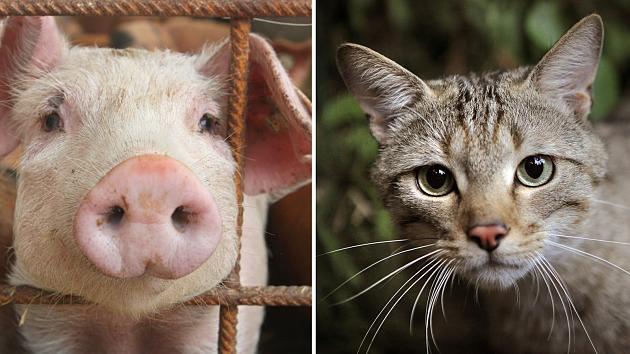 Lust eines dieser Tiere zu zerfleischen? Falls nein, dann sind Sie kein Carnivore!