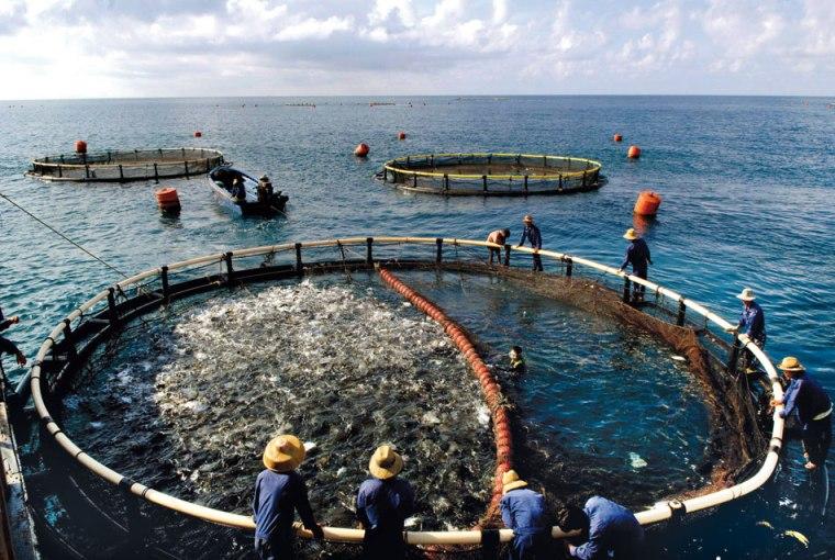 Fischfamen.jpg