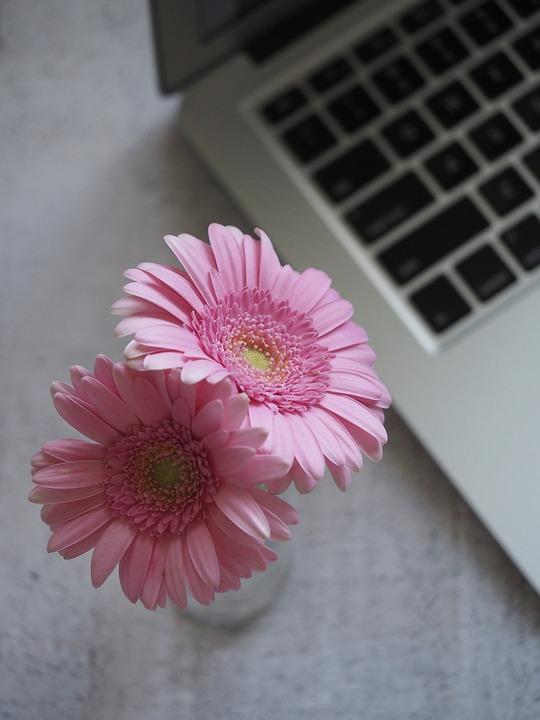 flower-3121972_960_720