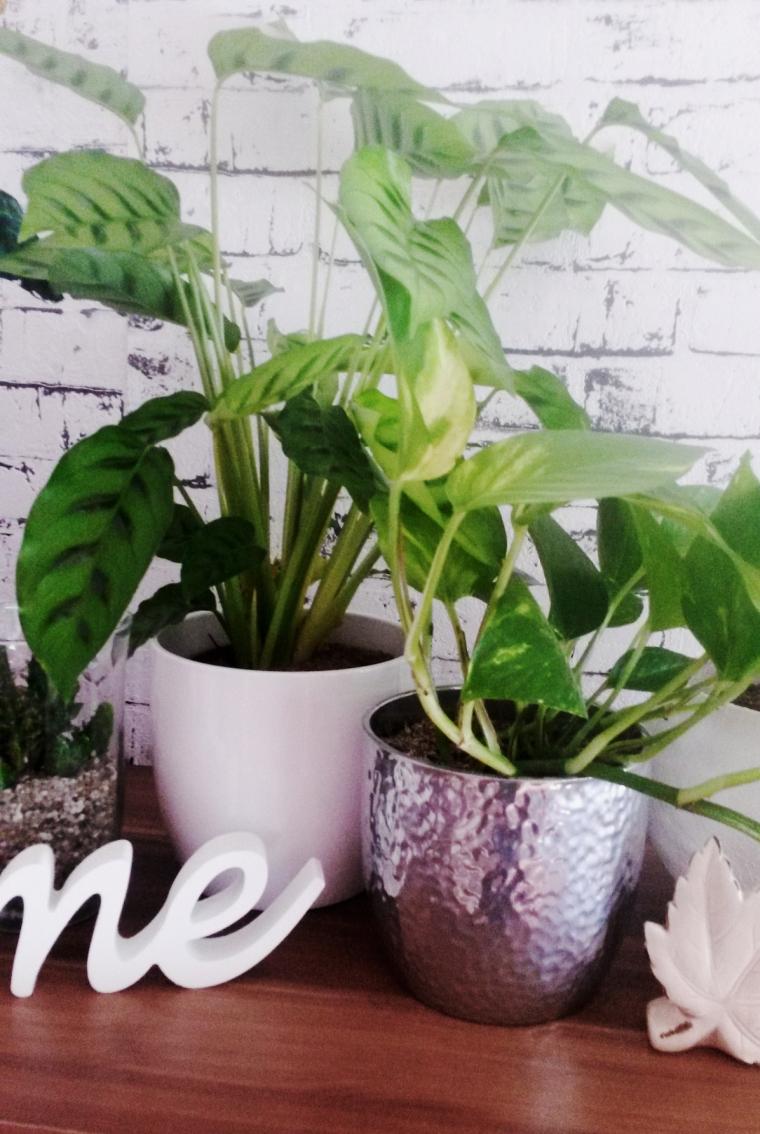 Pflanzen2